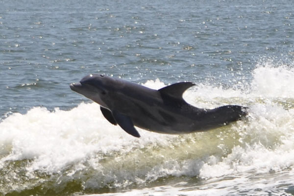 Dolphin Trip A